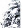 Bougainville Fuel Dump Fire