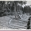 Building the Mahogany Bridge at Vella Lavella.
