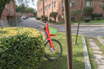 bicycle partly obscured by a shrub