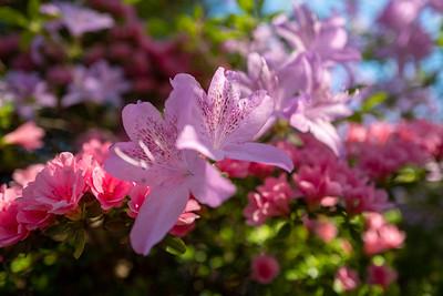 spring again