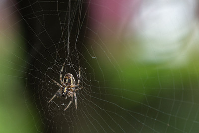 name that arachnid