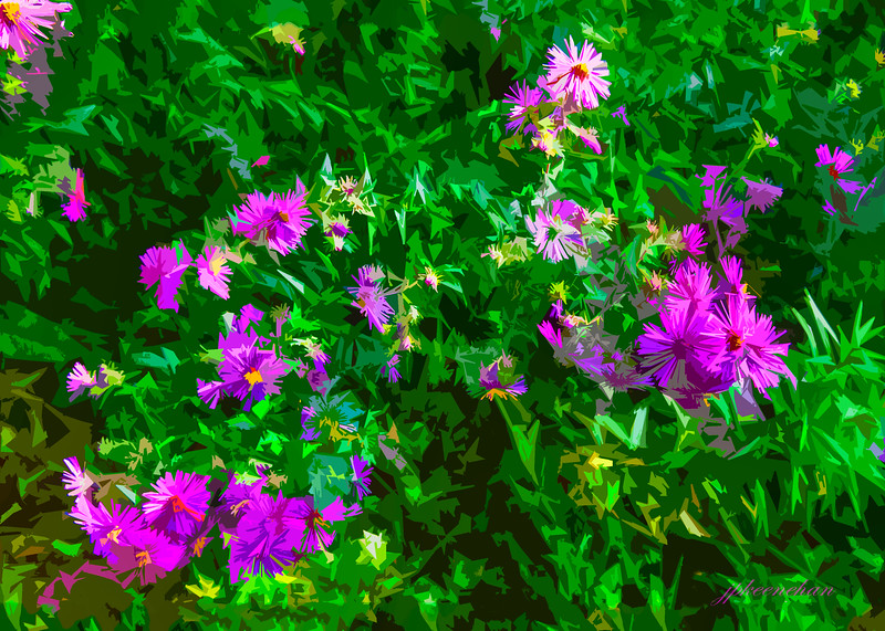Purple Wildflowers in the Catoctin Mountains of Maryland