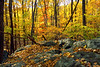 Fall in the Catoctin Mountains of Maryland