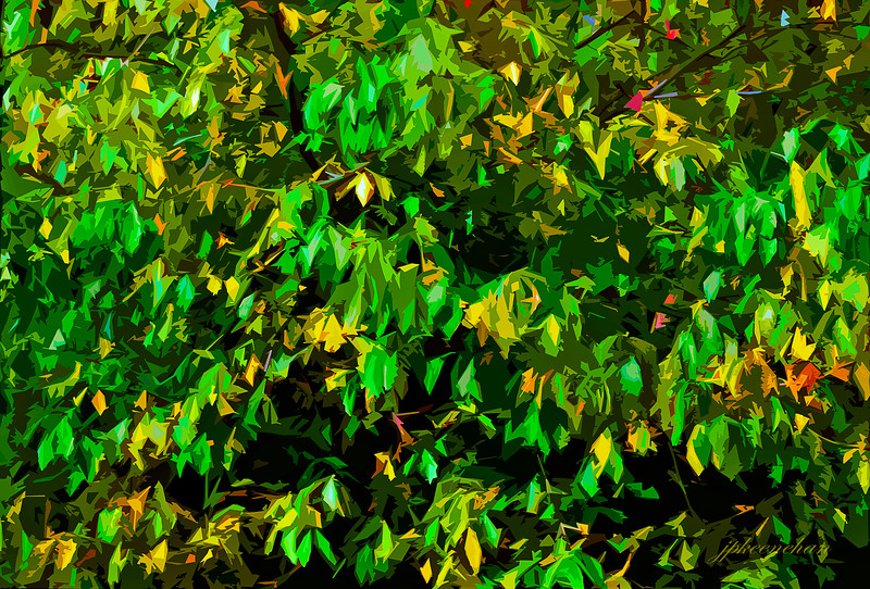 Green and Yellow Leaves in the Catoctin Mountains of Maryland