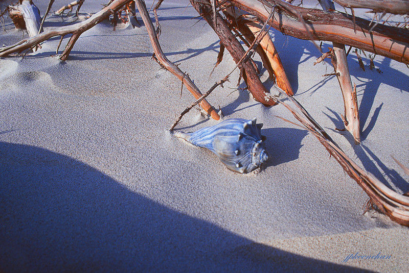 Sea Shell & Driftwood, North End, Ocracoke Island NC 2004