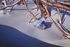 Sea Shell & Driftwood, North End, Ocracoke Island NC 2004