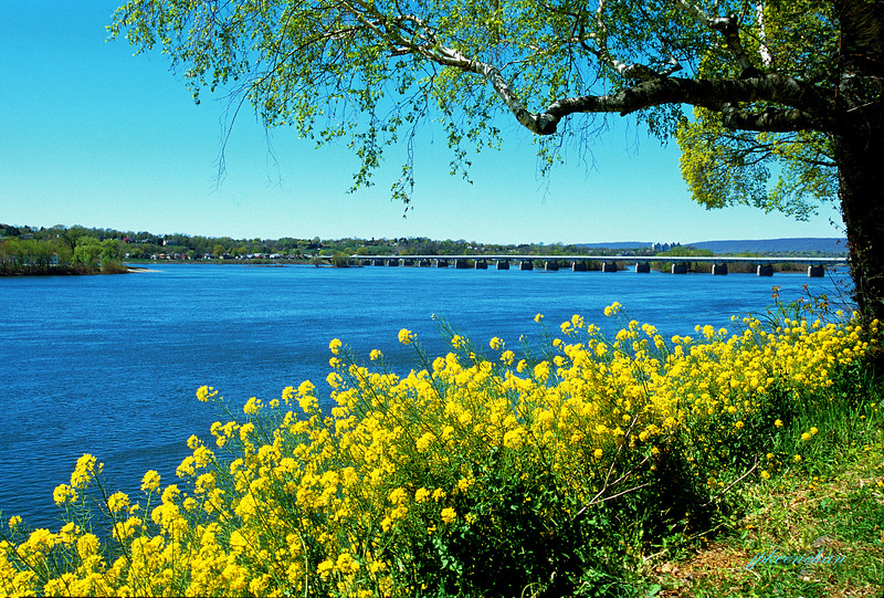 Harrisburg Pa - Along the Susquehanna River