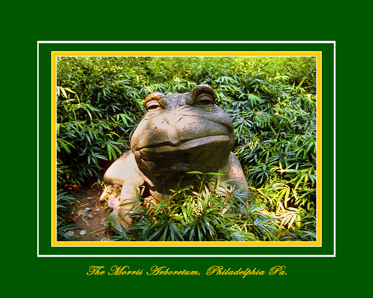 The Bullfrog at the Morris Arboretum