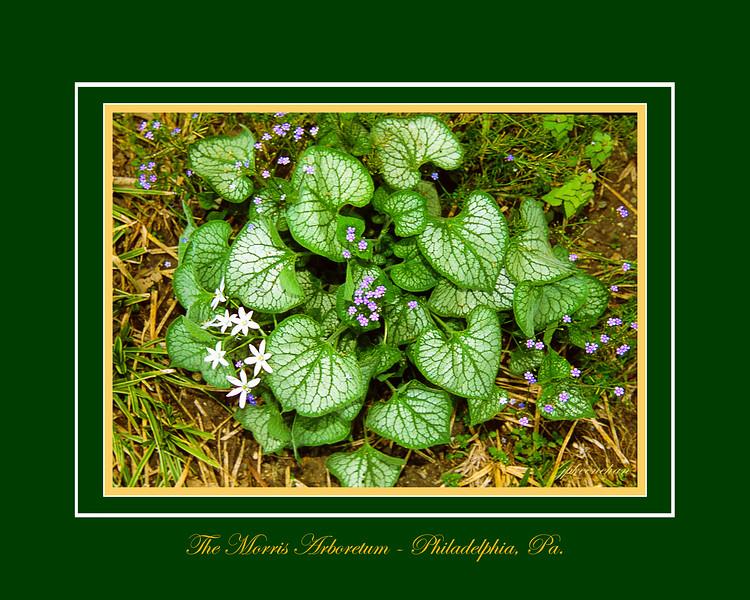 Ground Flowers at the Morris Arboretum