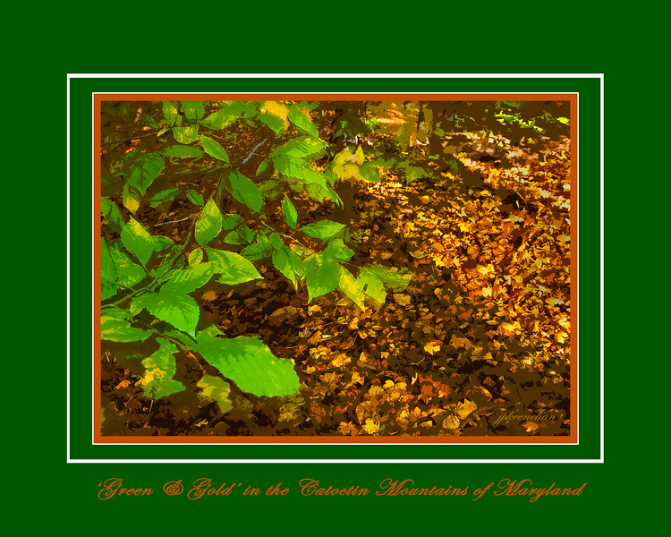 """""""Green & Gold"""" in the Catoctin Mountains of Maryland"""