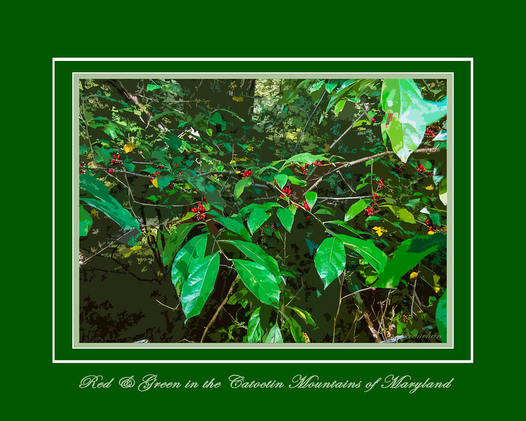 Red and Green in the Catoctin Mountains of Marylandd