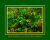 """""""Green & Yellow"""" Leaves in the Catoctin Mountains of Maryland"""