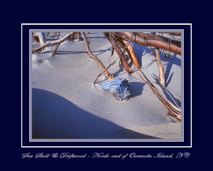 Seashell and Driftwood on the North End of Ocracoke Island, NC