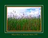 Wetlands Grass on Beach Road on Ocracoke Island, NC