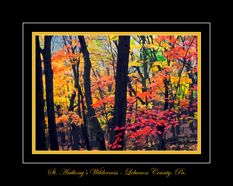 Fall Colors in St. Anthony's Wilderness in Lebanon County Pennsylvania