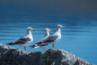 Three Gulls At Mono Lake