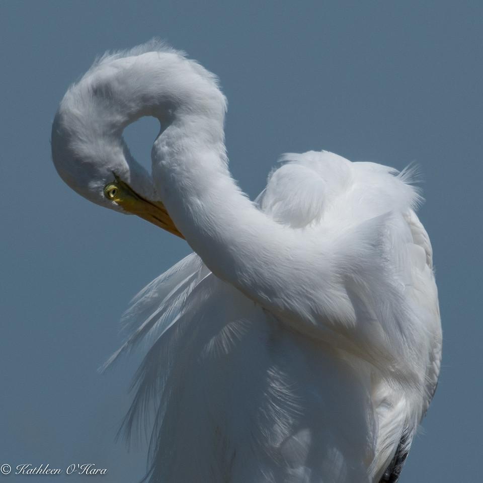Egret Yoga