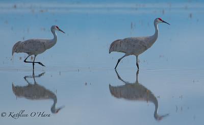 Cranes Wading