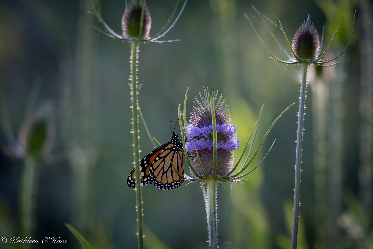 Monarch At Clearlake