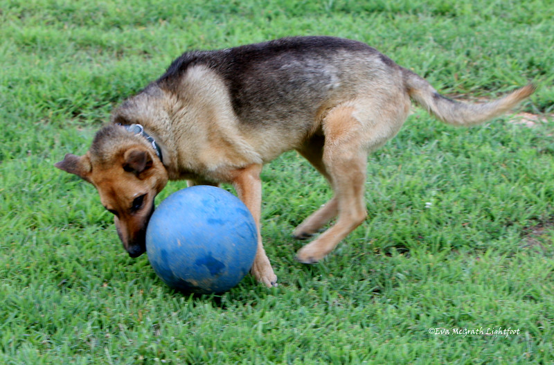 This is fuzzy, but he was having such a good time with his ball. August 16, 2009