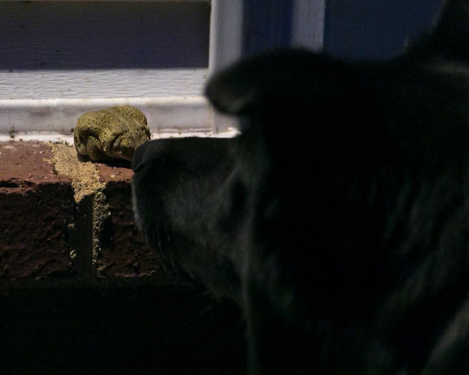 Ursa found a new friend.