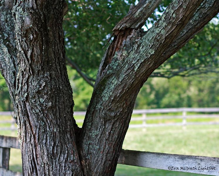 IMG_3023 Tree_edited-1