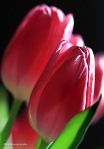 Happy Valentine,