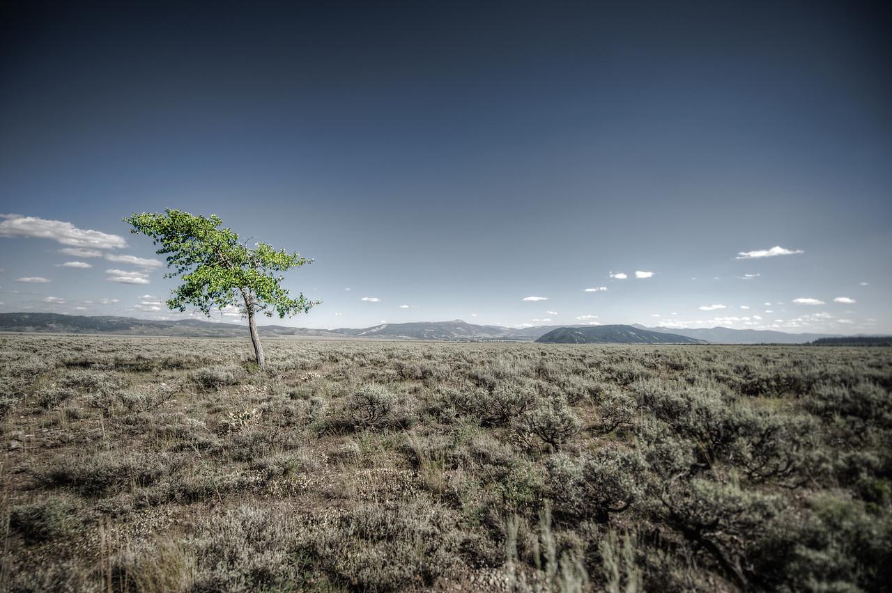 alone near the tetons