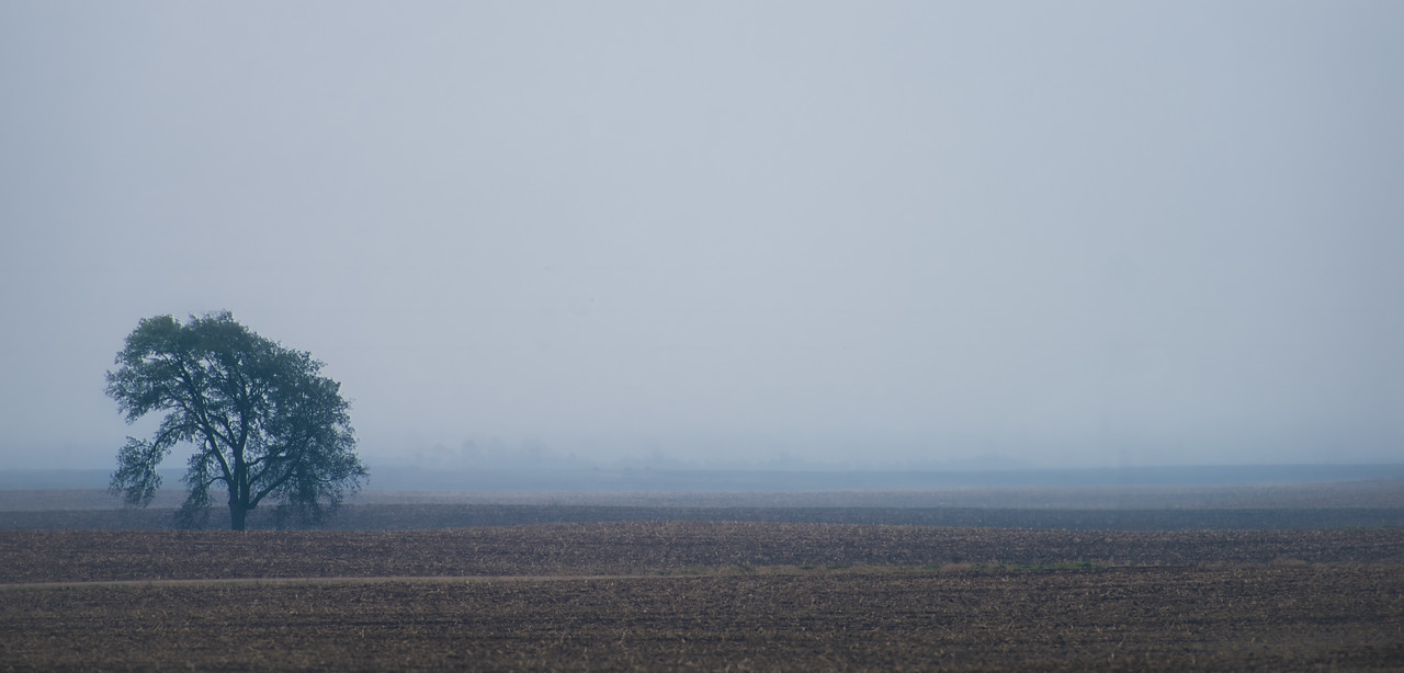 tree, fog, field