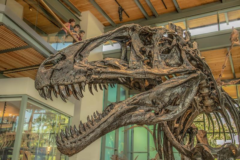 Dinosaur Skull, Witte Museum, San Antonio.