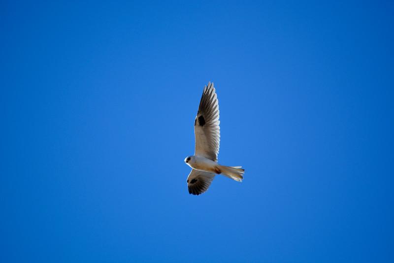 Soaring the Blue Skies