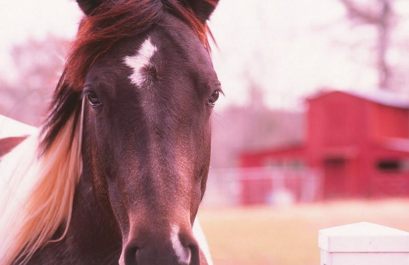close up horse-2