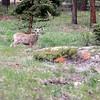 Colorado May 2013-286