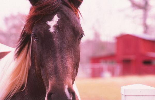 close up horse