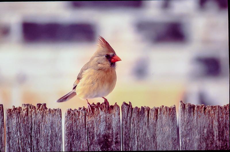 mamma bird-2