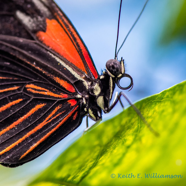 Butterfly, Pacific Science Center, Seattle
