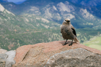 At Rocky Mountain National Park