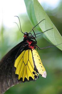 Butterflies IMG_5001