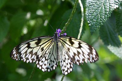 Butterflies IMG_4974
