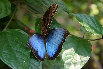 Butterflies IMG_4676