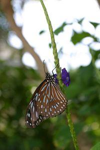 Butterflies IMG_4835