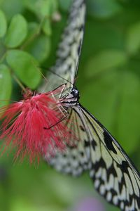 Butterflies IMG_4633