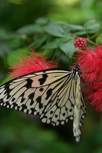 Butterflies IMG_4608