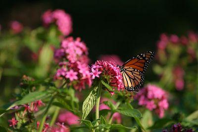 Butterflies IMG_7858