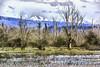 Fir Island, Skagit River Delta