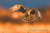 Salish Hawk