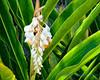 Kauai garden flower