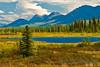 Late summer, Broad Pass, Denali National Park, Alaska