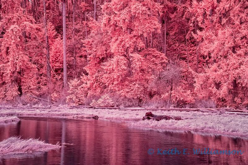 Camano Island, winter infrared