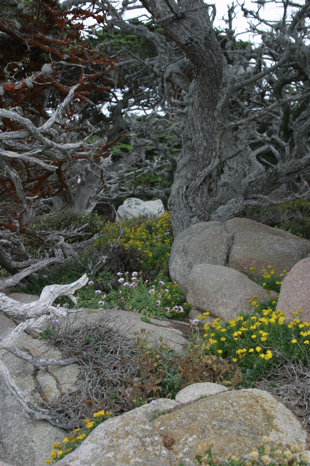 Point Lobos, Carmel, CA